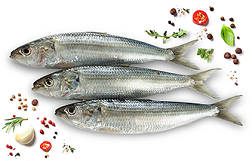 Buy Fish online @ Kochi |Fresh Fish Online | Free Home delivery