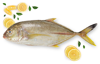 Yellow trevally fish